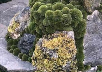 Gardengigs-Chelsea-Flower-Show-Garden-Moss-and-Algae