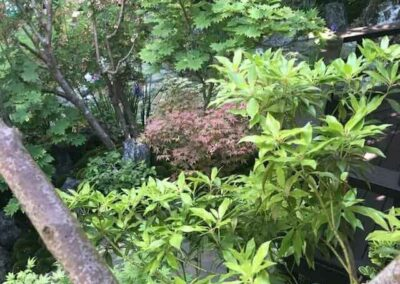 Gardengigs-Chelsea-Flower-Show-Shrubs-and-Trees