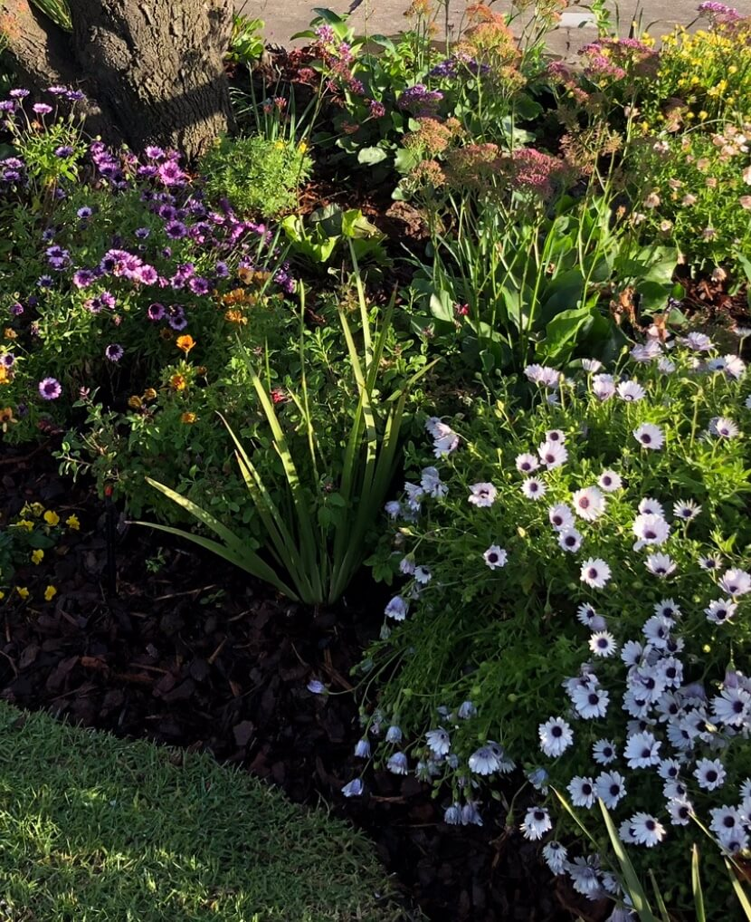 Gardengigs Garden Landscape Construction Canberra Services - Lush and Blooming Colorful Flowers and Lively