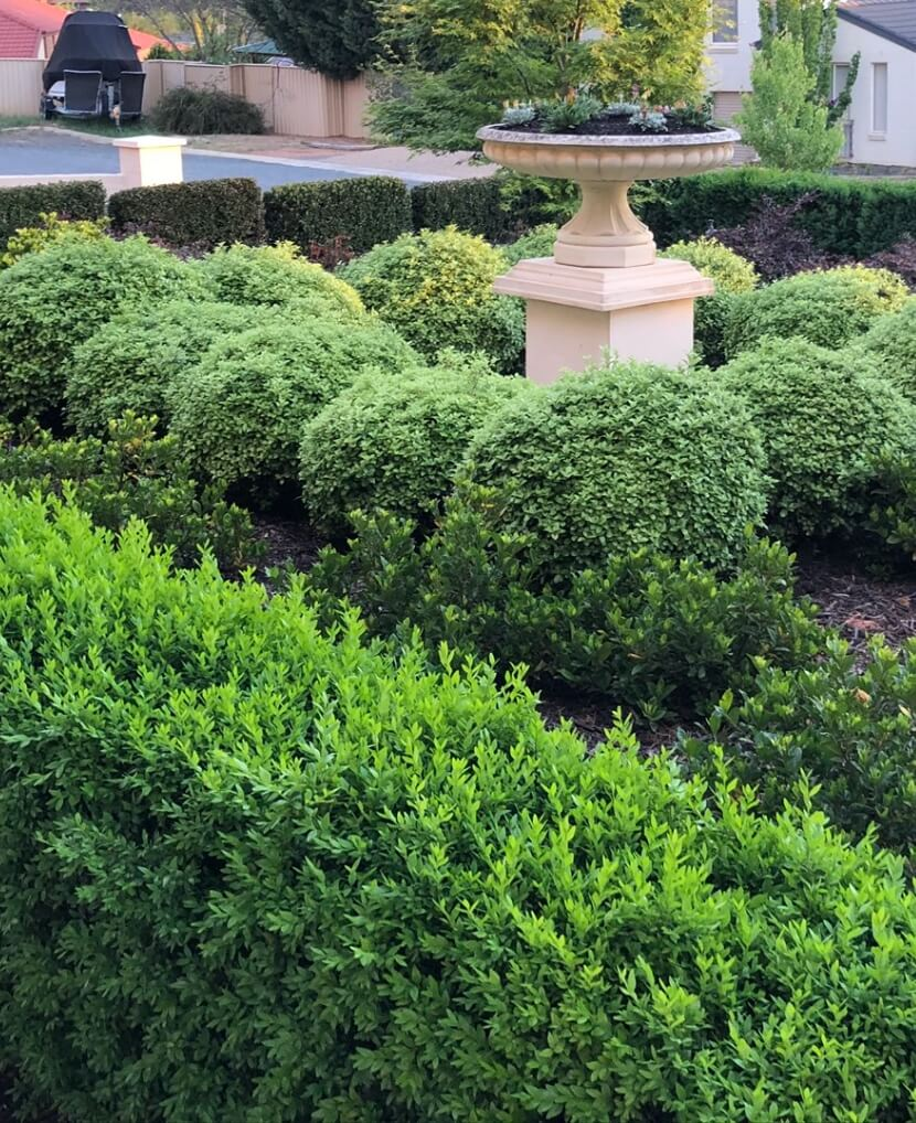 Gardengigs Gardening Designers Canberra Services - Lush and Blooming Green Garden with Center Raised Pot